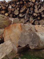 Coldharbour Logs - Quality, sustainable firewood, logs and kindling suppliers in Wareham, Bournemouth Poole Parkstone Wareham Swanage Blandford Dorchester Bare Regis Wimboune